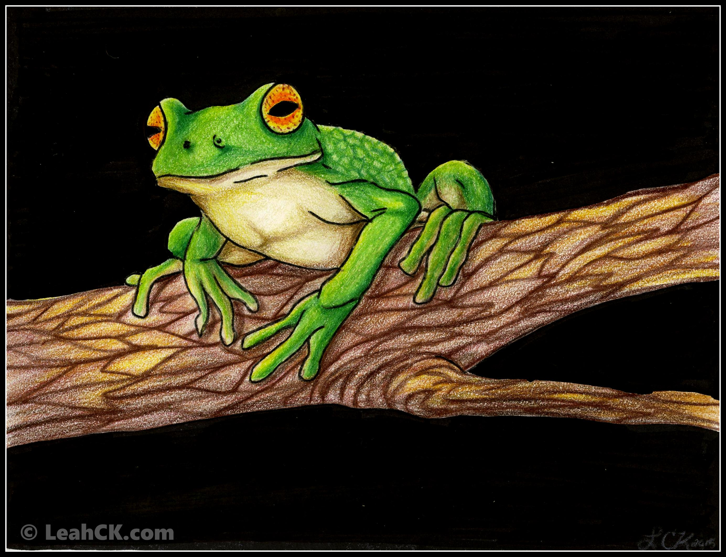 White_lipped_tree_frog