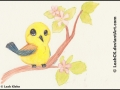Prothonotary Warbler dA